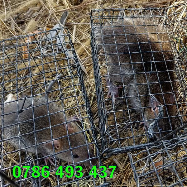 bán lồng bẫy chuột, giao hàng toàn quốc