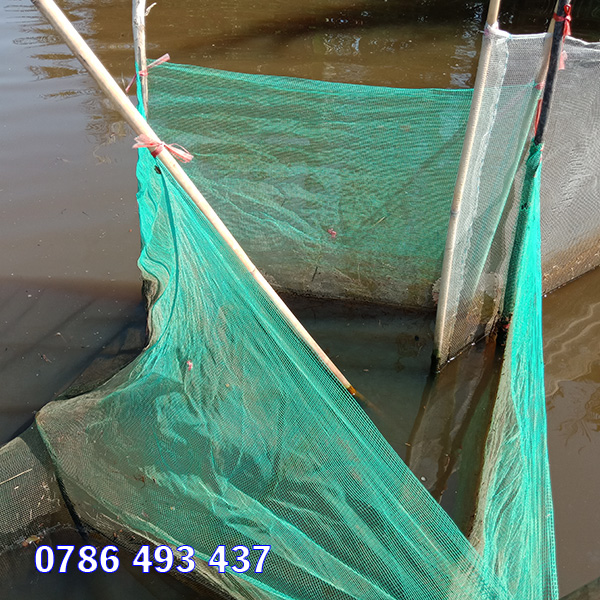 Bán dớn bắt cá giao hàng toàn quốc
