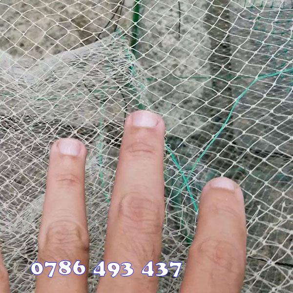 bán lú bắt cá, giao hàng toàn quốc