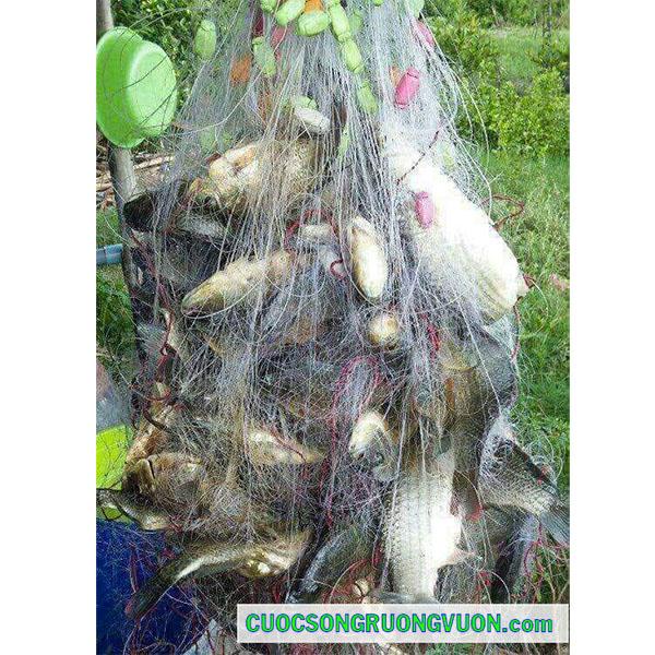 bán lưới bắt cá đồng ba màn, giao hàng toàn quốc